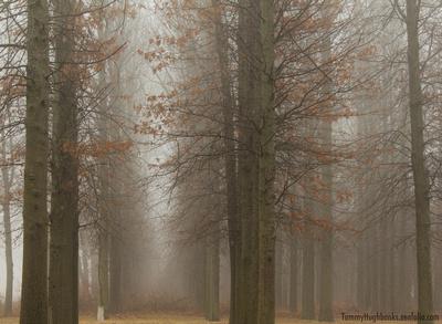 Foggy Nebraska Forest